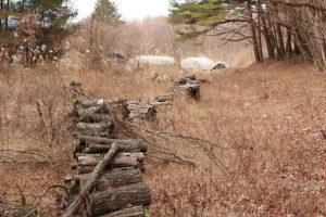 冬に行われた開墾。来年の春にはここが 畑に変わる予定。
