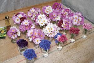 """水あげ作業中のエディブルフラワー。水に差した 状態で出荷となる。花首付きで水に差しておけば1 週間はもつ。鈴木さんいわく、日本で1番狭い選花場。 """"コックピットスタイル"""" と名づけて作業を楽しんで いる。"""
