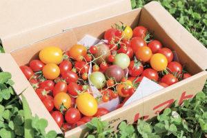 宝石のように輝く色鮮やかなトマトの詰め合わせ。仕上げにマイクロミニトマトを乗せて演出。