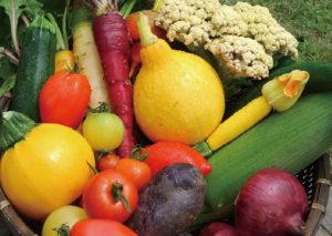 多品目栽培によって、みたこともないような色や形をした野菜たちが並ぶ。