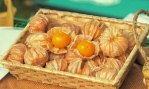 収穫されたオレンジチェリーは実が大きく、爽やかな甘い香りを放っている。