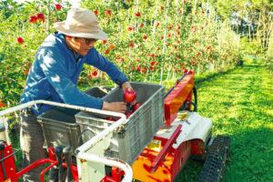 機械を使って、高所のリンゴの収穫も スムーズにできる